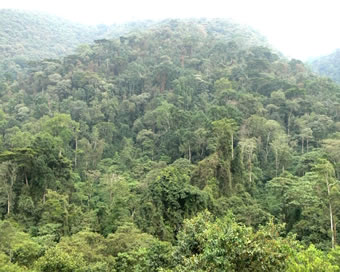 The Impenetrable Forest - Home to the Gorillas