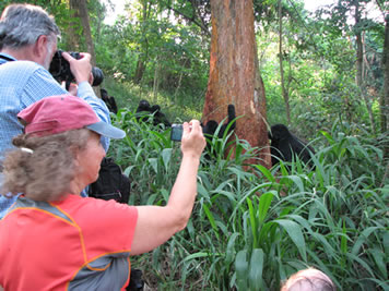 Taking Pictures of the Mountain Gorillas on a Uganda Gorilla Tour